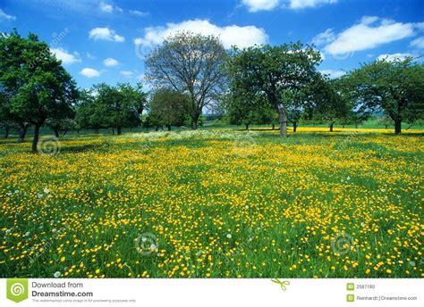 panorama fiori telefono prato con i fiori 6 fotografia stock immagine 2587180