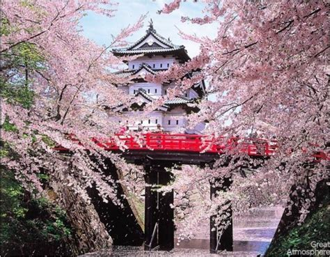 when did japan give us cherry blossoms viewing japan s cherry trees in bloom an otherworldly