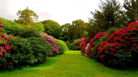 photos flowers gardens beautiful nature flowers garden images wallpapers whatsapp