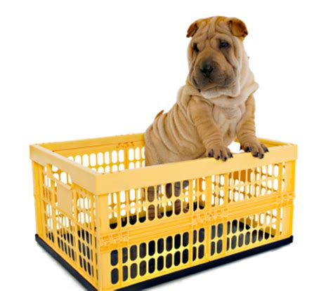 my puppy keeps pooping in his crate at puppy potty tips thedogtrainingsecret the secret