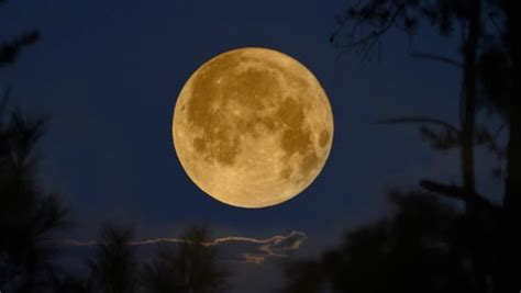 full strawberry moon strawberry moon resize jpg