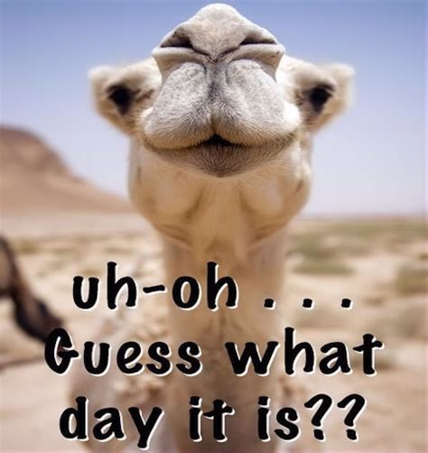 Guess Jpg1 uh oh guess what day it is pictures photos and images