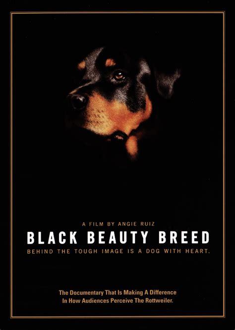 themes black beauty form 1 black beauty breed 2014 angie ruiz synopsis