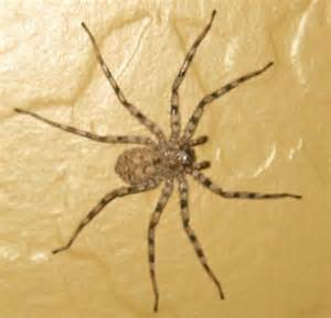 spiders at spiderzrule the best site in the world about