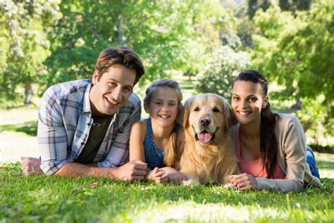 are golden retrievers family dogs top 10 family dogs factual facts