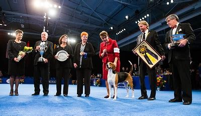 forget football the national dog show is thanksgivings our favorite thanksgiving treat the national dog show