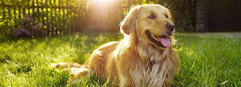does petsmart sell dogs choosing the best food petsmart food center