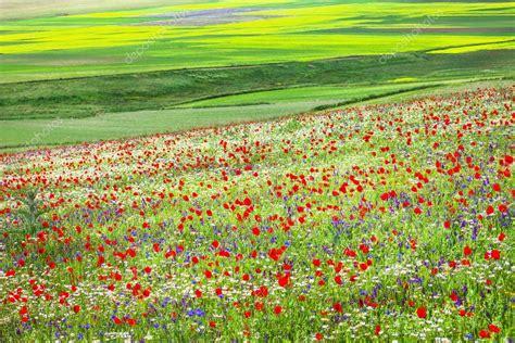 prati fioriti prati fioriti a castelluccio di norcia umbria italia