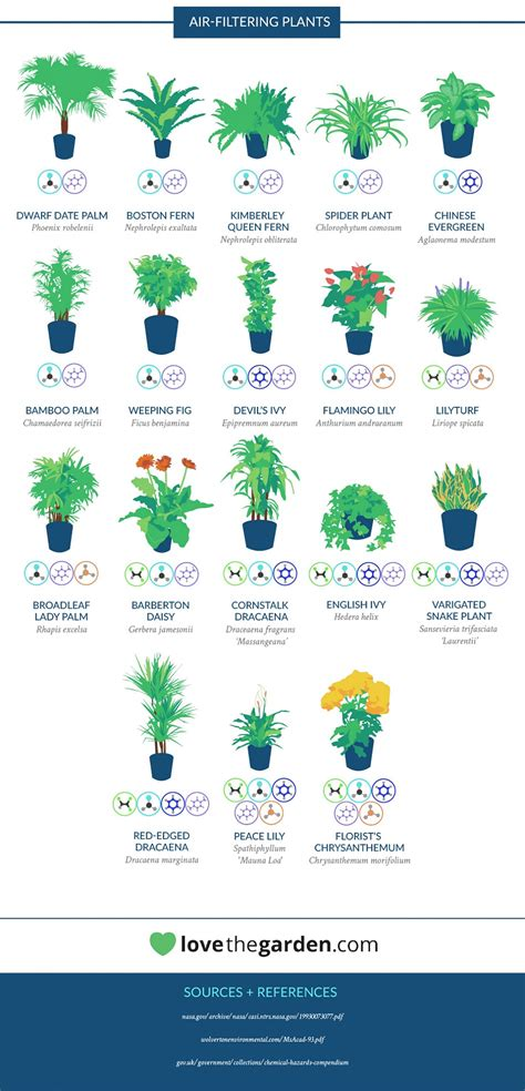 nasa plants air quality page 3 pics about space infographic the nasa guide to air filtering plants