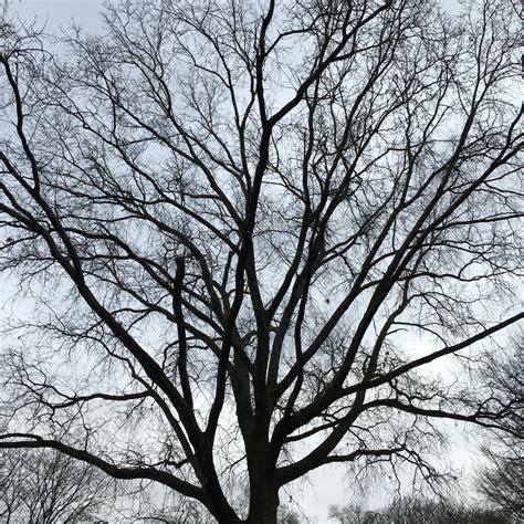 0008218439 the hidden life of trees the hidden life of trees improvised life
