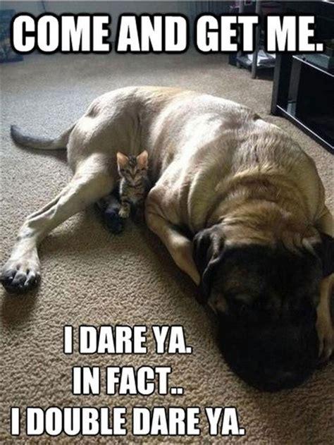 more funny animal memes 20 pics