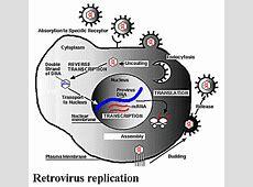 Biological Diversity I Retrovirus