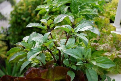 pflanzen zu hause essbare bl 252 ten und pflanzen in der gartengestaltung 9 tipps