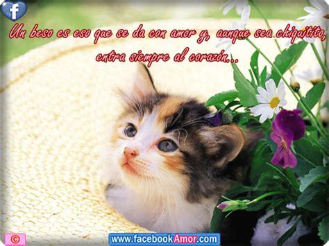 imagenes romanticas de gatos fotos de gatitos con frases romanticas imagui