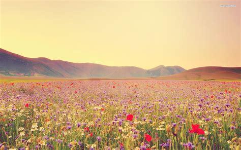 wildflower background fields of wildflowers wallpaper wallpapersafari