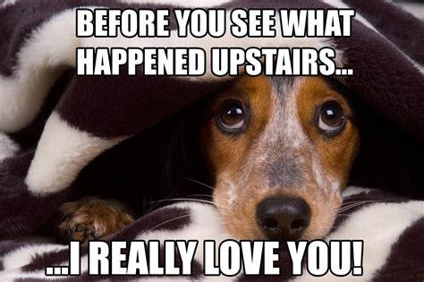 Sad Animal Memes - 17 dog memes that will help you get through the week