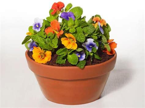 flower pot best 25 flower pot cake ideas on pinterest cupcake