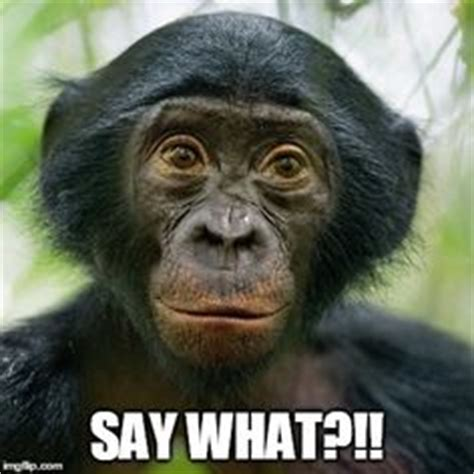 Chimp Meme - what do you think our gorilla is thinking columbus