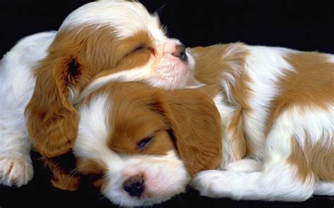 Hd Puppies Pictures Puppies Images Puppy Photos Puppies Wallpapers Puppies