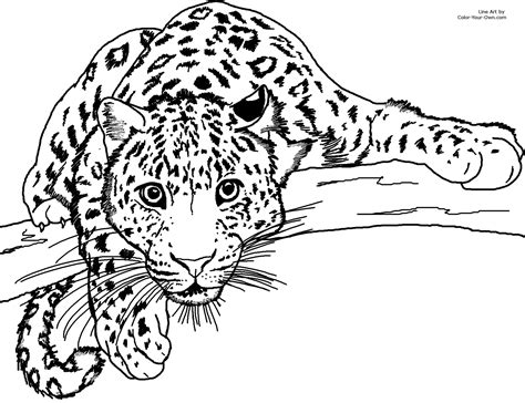 color page cheetah 5 animals printable coloring pages