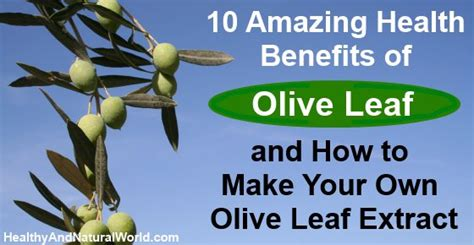 Olive For Health And by 10 Amazing Health Benefits Of Olive Leaf And How To Make