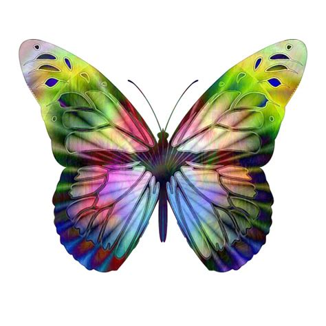 butterfly colors op multi colored butterfly free stock photo