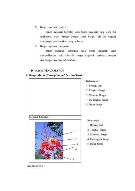 laporan praktikum  bunga majemuk morfologi tumbuhan