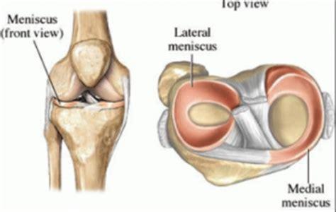 meniscus diagram knee cartilage or meniscal tear anatomy diagram
