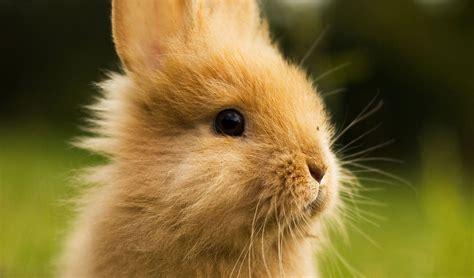 wallpaper cute rabbit cute bunny backgrounds wallpaper cave