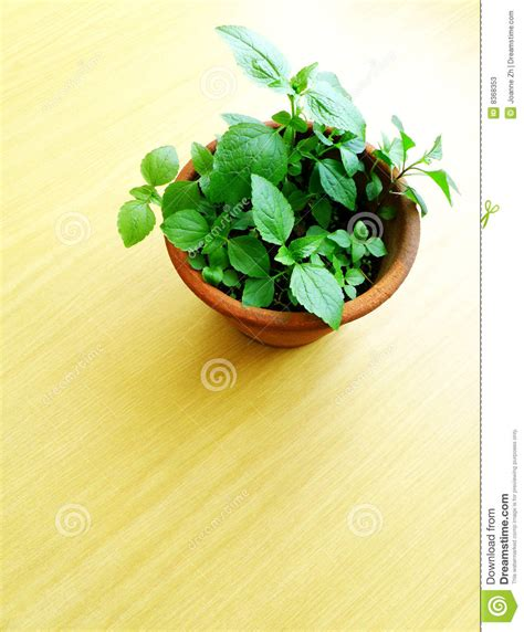 wood table top  potted green plant stock image image
