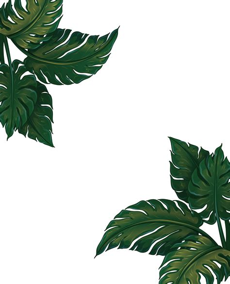 leaf musa euclidean vector green frame basjoo