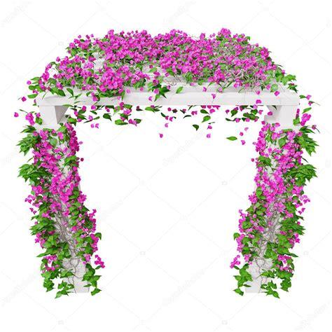 bouganville fiore bouganville ricante a fiori rosa foto stock
