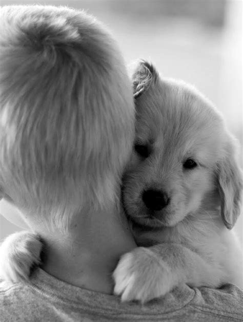 Cães abraçando seus donos - Blog Animal