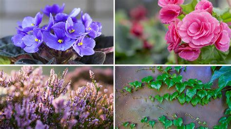 terrazzo fiorito terrazzi fioriti tutto l anno
