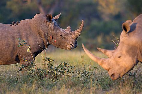 South Africa 2007 - White Rhinoceros