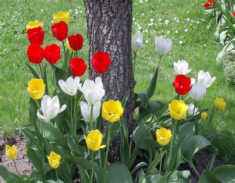 pictures of spring flowers missing the point relgious discussions christian