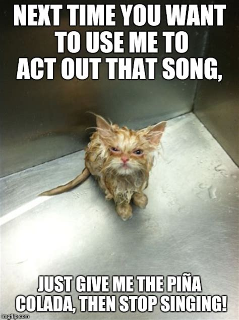 cat songs songs to sing to your cat and other feline favourites books kill you cat meme imgflip