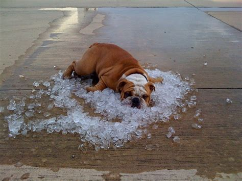 how to keep dogs cool outside dogs and weather 17 tips for keeping it cool this summer
