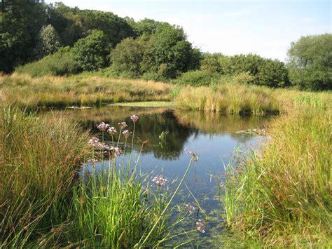 garden lakes  ponds project cumbria landscape