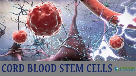 umbilical cord mesenchymal stem cell therapy cord tissue