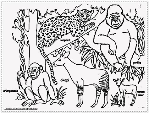 coloring pages of safari animals realistic jungle animal coloring pages realistic