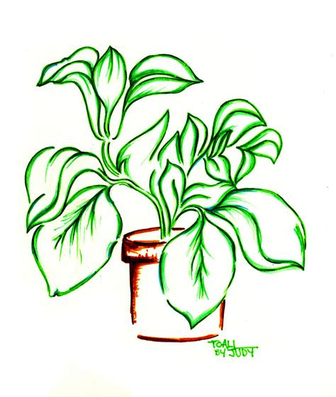 Drawing Plan image gallery plant drawings