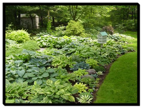 Hosta Garden Layout Hosta Garden Design Software For Room Design