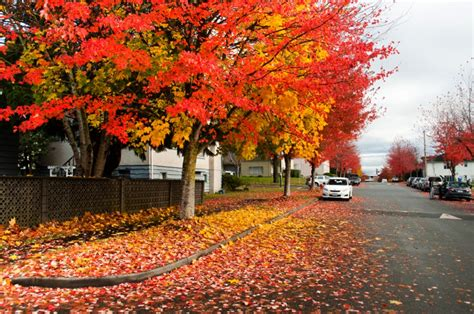 in fall vancouver in fall season photo essay vancouver homes