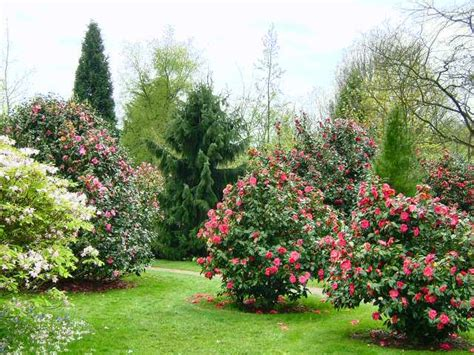 Garden Flowering Shrubs Emmetts Shrub Garden