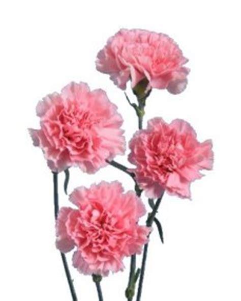 Victorian Home by Carnation Flower Information Carnation Cut Flower