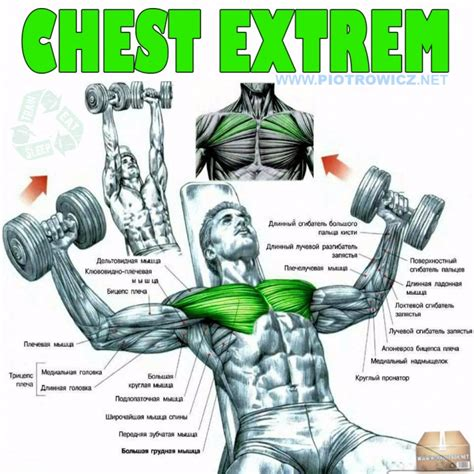 exercise for chest with dumbbells