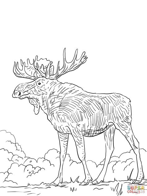 eurasia coloring page eurasia elk coloring page free printable coloring pages