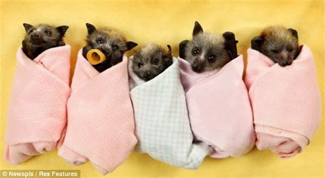 cute baby flying fox bat foranimallover bats out of hell the super cute little