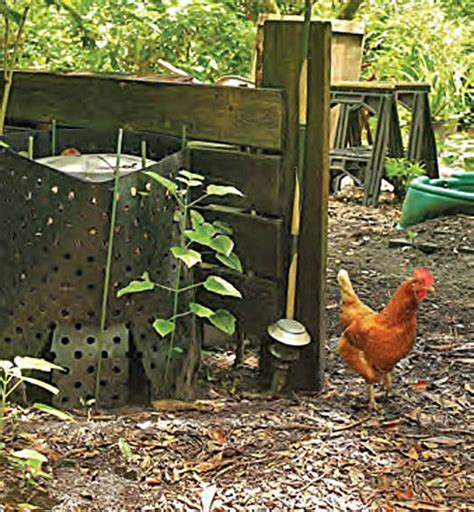 38 Best Images About Chickens And Gardens On Pinterest Chicken Manure Vegetable Garden